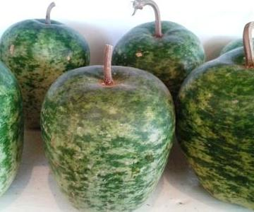 Apple gourds